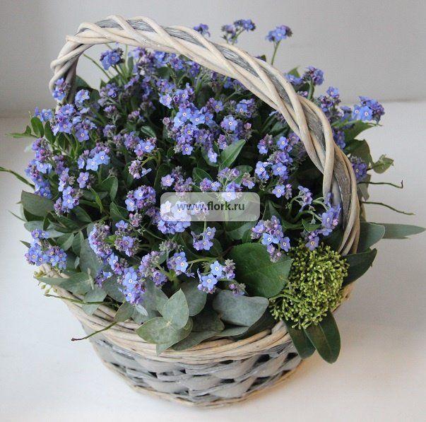Незабудки цветы купить