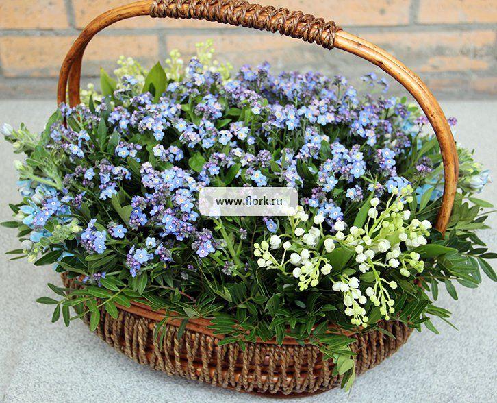 Незабудка цветов в клумбе